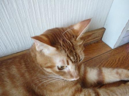 0967宇宙猫 (3)