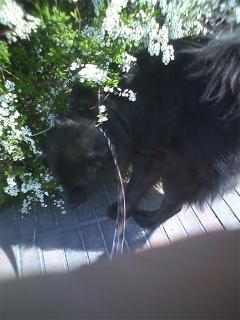猫探し中のむっちゃん