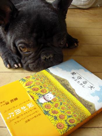 2009-07-31 星守る犬