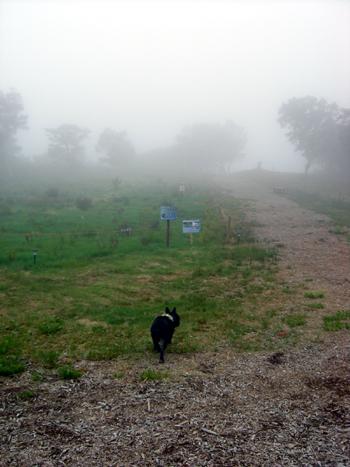 2009-08-12 Mt.ジーンズ2