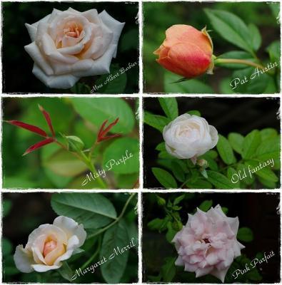 rose 002-horz-vert