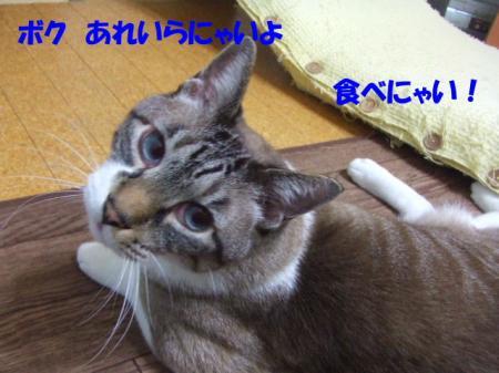 DSCF08141.jpg