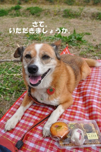 権現堂桜堤201104 228