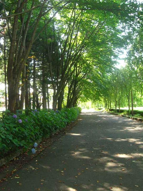 都南中央公園8