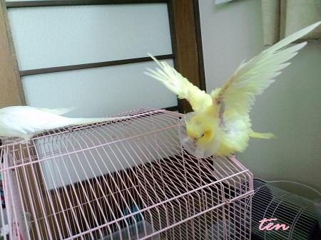 鳥だ~(笑)