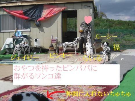 IMG_7977-1.jpg