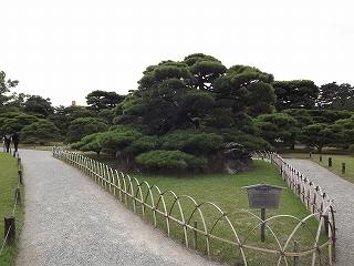 鶴亀松(百石松)