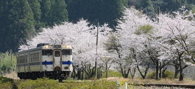 sakura2_20110410183724.jpg