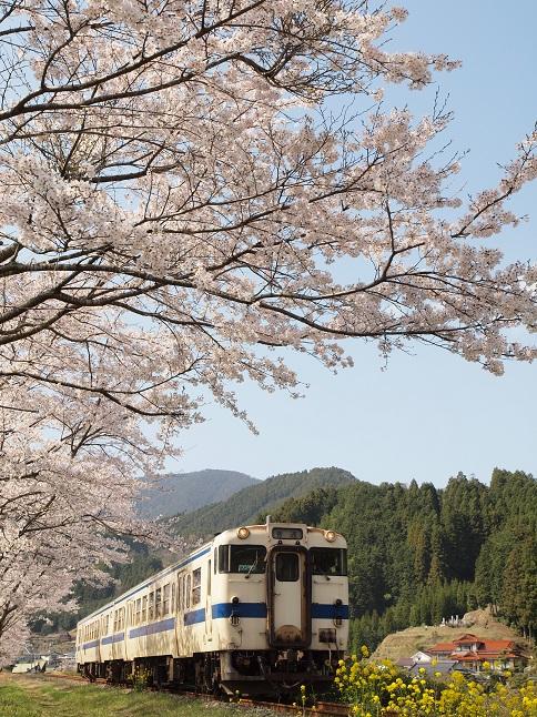 sakura8.jpg