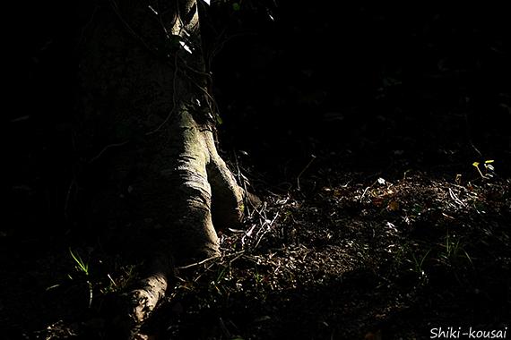 木の幹に落ちる光