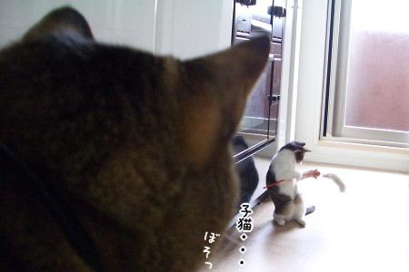 猫じゃらしで、あらよっ