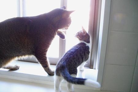 大猫、猫娘