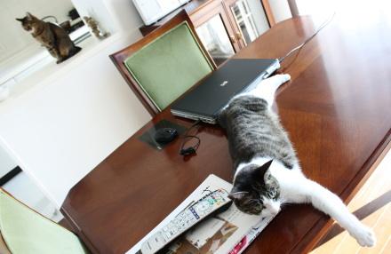 たかが五の 休みに嬉々とす ヒト憐れ by猫