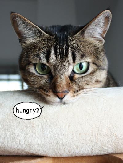 昼ごはん、食べた?