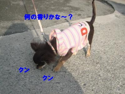 tyoko2.jpg