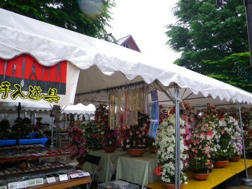 サツキ祭り528
