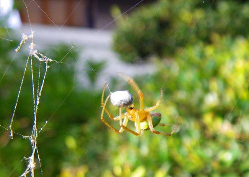 蜘蛛の餌巻き723