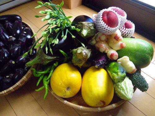 野菜731