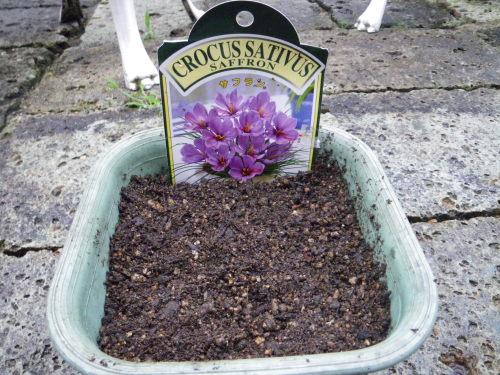 小さな鉢植え83