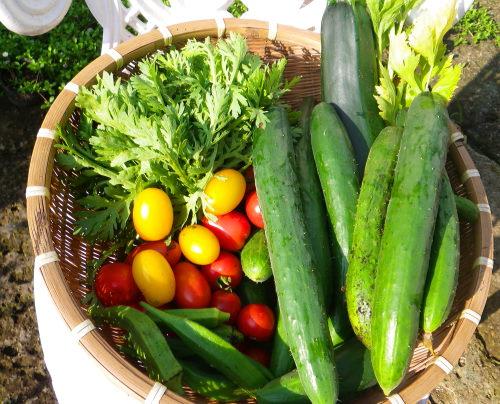 朝採り野菜87