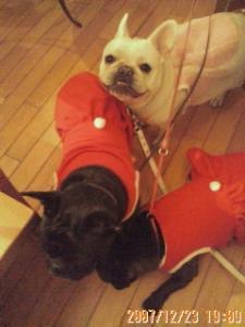 クリスマス会の犬達