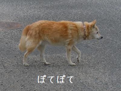 たぷたぷ1