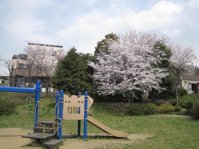 kawasemi-2.jpg