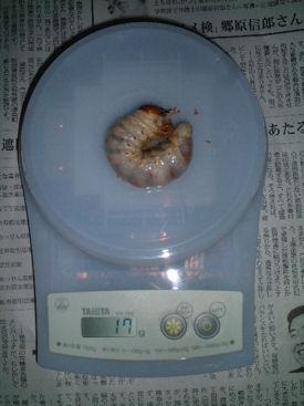 09インドAL-07体重