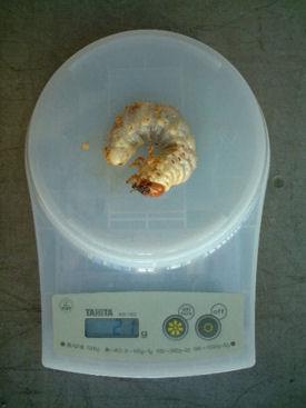 XAL09 体重
