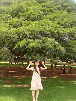 この木なんの木2