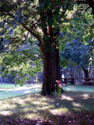 yumenoshima-tree