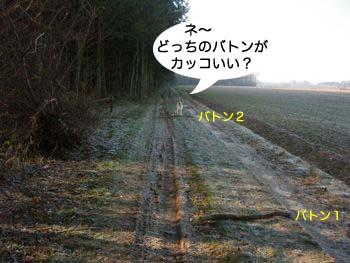 2007122008.jpg