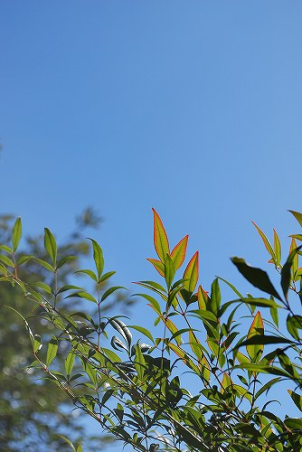 秋の空DSC_0021