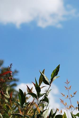 秋の空DSC_0095