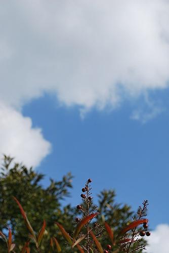 秋の空DSC_0099