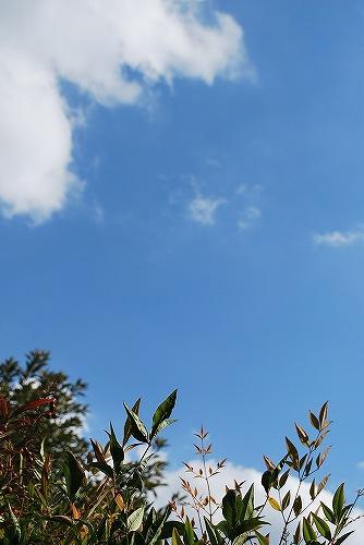 秋の空DSC_0106