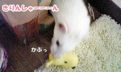 きりんさん☆