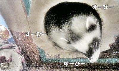 あゆむさんのお休みタイム中☆