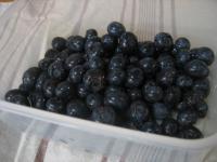 フレッシュブルーベリーs