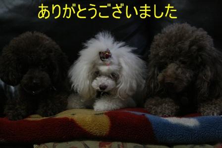 IMG_0642i.jpg