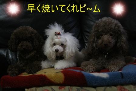 IMG_0644i.jpg