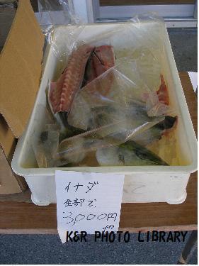 イナダ3000円
