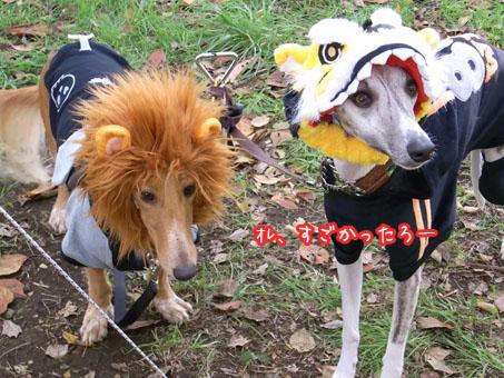 仲良しライオン&虎(服はジャイアンツ)コンビ