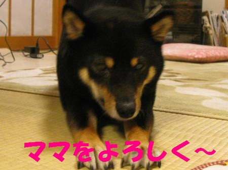 003_convert_20110512121619.jpg
