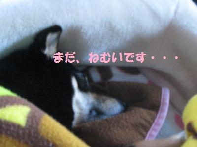 004_convert_20110505161348_20110505162501.jpg