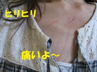 014_convert_20110425145848.jpg