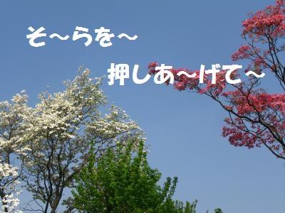 028_convert_20110428113527.jpg