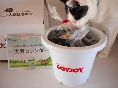 大豆栽培セット