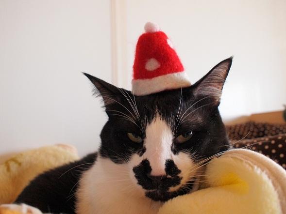 メリークリスマスにゃ