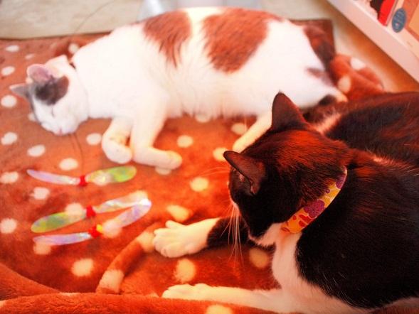 猫らにもプレゼント♪